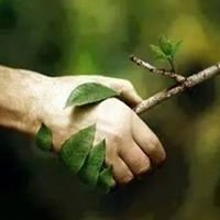 Quinlan Tree Service