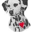 Willing Hearts Dalmatian Rescue, Inc - PA, NY, NJ, MD, DE, OH, SC