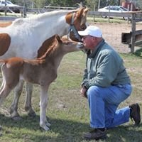 Chincoteague Pony Farm