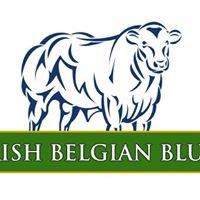 Irish Belgian Blue Cattle Society