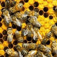 Bee Ideal Beekeeping