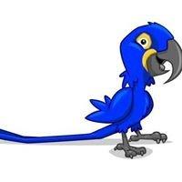 Bird Fever