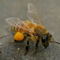 Ted's Beekeeping