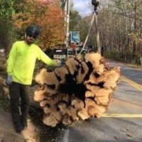 Carr Tree & Timber LLC