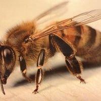 Bee Hoffman