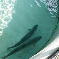 Friends of US Fish & Wildlife North Attleboro Hatchery