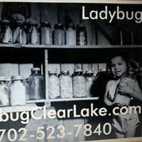 Ladybug Greenhouse Cafe, Bakery,Wellness Center & Spa CLEAR LAKE, IOWA