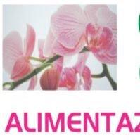 Erboristeria Orchidea
