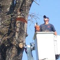 Pauls Tree Service