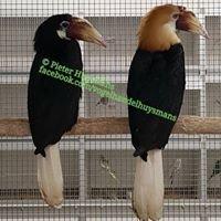 Bird export Huysmans-Boonen Belgium