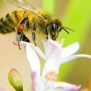 Clogher Valley Beekeeping