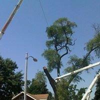 County Tree Service Inc.