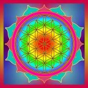 Infinite Light Wellness