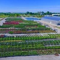 Green Glen Nursery, Wholesale Division