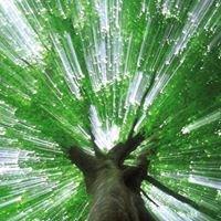 Pino Tree Service, Inc.