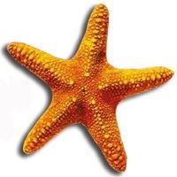 SeaStar Water Sports