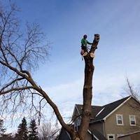 Arborstrong Tree Service