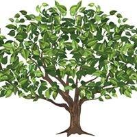 Dudek & Foti Tree Service