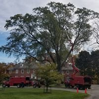 Crawford Tree & Landscape Services, Inc.