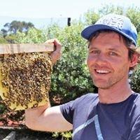 Noahs Ark Beekeeping workshops
