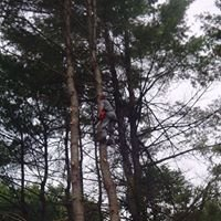 Keith Youngs Tree Service