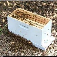 Sweet Bear Honey Farm &  Apiary LLC