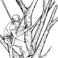 Express Tree Service