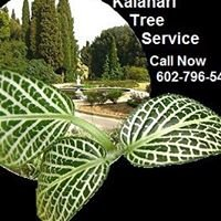 Kalahari Tree Service