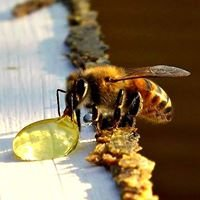 BUSY BEE Central Texas Beekeeping Supplies