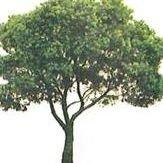 RF Tree Service