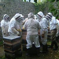 South Kildare Beekeepers Association