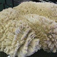 The Fleece Factory Of The Rockies