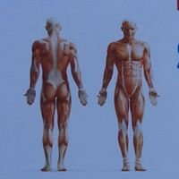 Carl Browne Sports / Massage Therapist