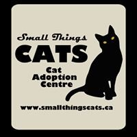 Small Things CATS