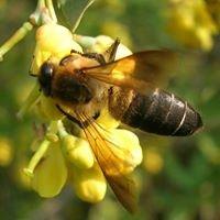 Μελισσοκομία Οίτης- ΜΕΛΙ ΟΙΤΗΣ