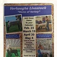 Verhaeghe 'K' Kids Livestock & Club Lambs.