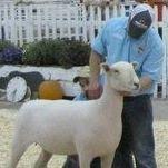Northern Starr Livestock Services