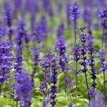 Botanic Tactus | Aromatherapy + Body & Soul Care