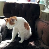 Beverly's raffle to help stray  and feral cats
