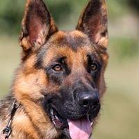 Kentucky Canine Training Center