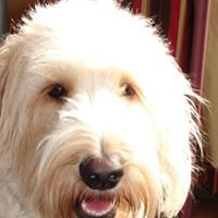 Bella Girl Bakery, LLC - handbaked dog treats