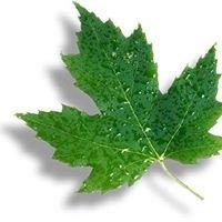 Silver Leaf Massage