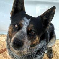 Morgan County Animal Control  UTAH