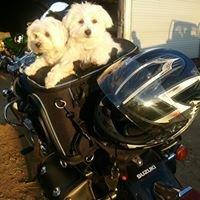 Puppies R Love