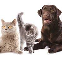 Animal Wellness Veterinary Clinic