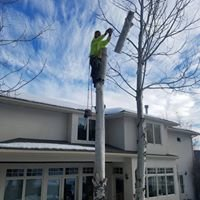Dukes Tree Service