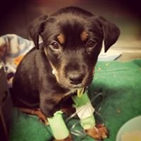 Austin Pets Alive Medical Clinic