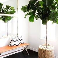 Erin Kane Interior Design