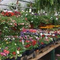 Clover's Garden Center in Willowbrook