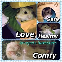 Lovepets-hamsters